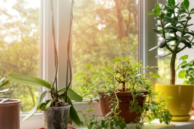 Plants for the windowsill