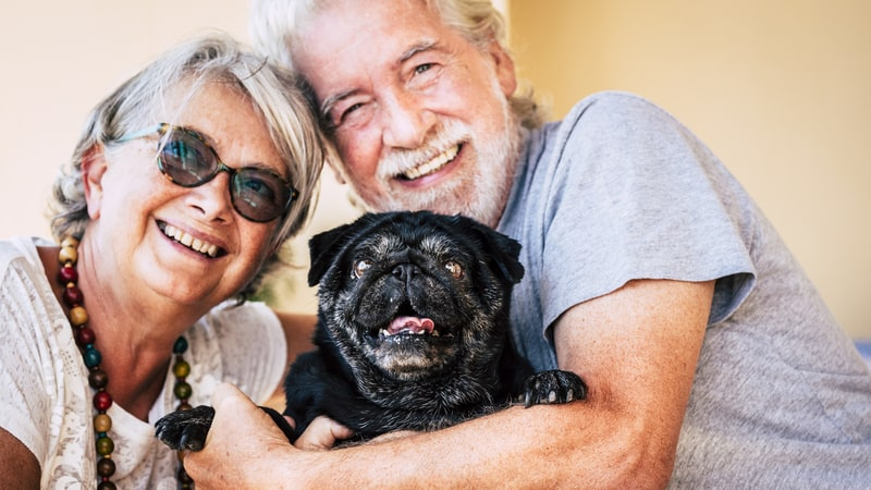 A pug is one of the best dog breeds for seniors