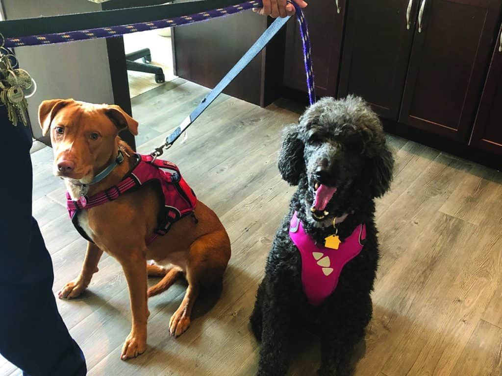 Therapy dogs at Anthology Of Meridian Hills