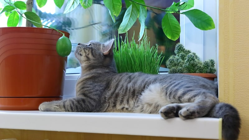 Cat looking at some safe houseplants for cats