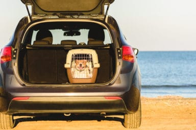 Travel with dogs in the car