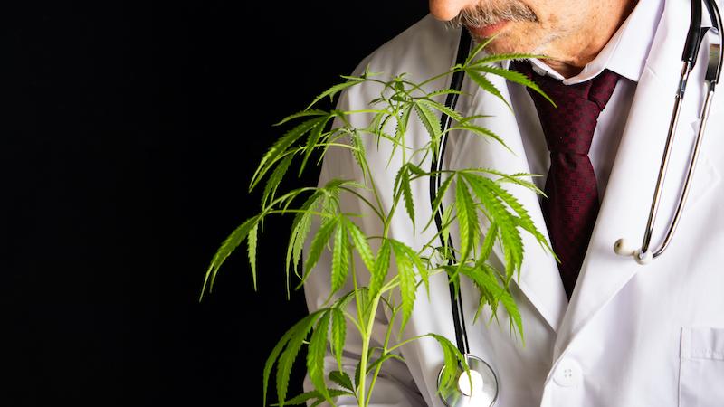 doctor holding marijuana plant (photo credit, saletomic dreamstime) for article on medical marijuana for seniors