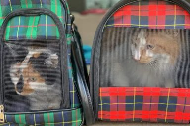 Two cats in carriers for article on tips for moving with pets
